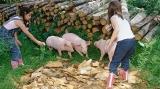 """每亩地节省1000元,看种菜养猪的AI""""黑科技"""""""